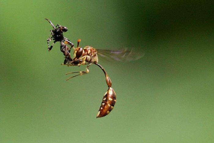 Насекомые под микроскопом атакующие